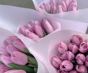 Tulips for everyone 🌷🌷