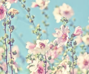 spring, flowers, and blossom image