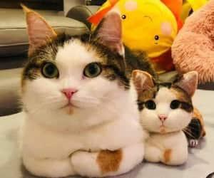 Polite lookin cats