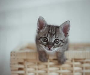 animal, kitten, and aww image