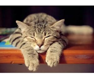 animal, aww, and cat image