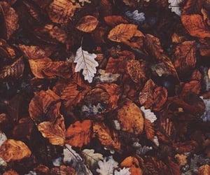 autumn, 🍁, and tanheedah image