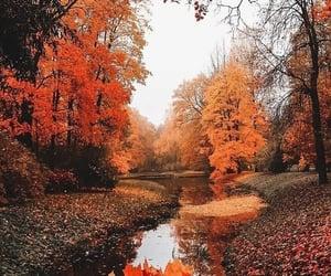 leaves, tanheedah, and autumn image