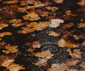 autumn, cold, and leaf image
