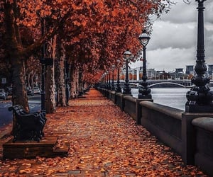 autumn, leaf, and river image