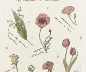 article, Fleurs, and flowers image