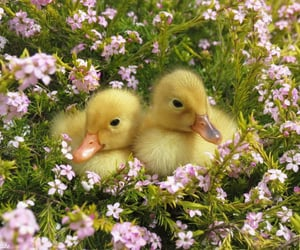 animals, flowers, and nature image
