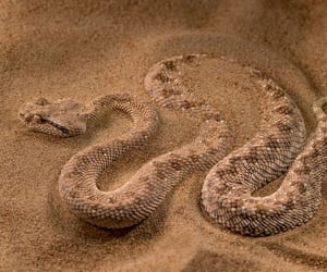 aesthetic, sand, and snake image