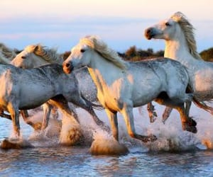 horse, horses, and splash image