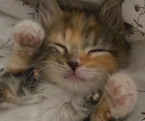 cat, lovely, and cute image