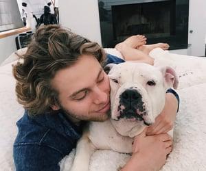 dog, cute, and 5sosfam image