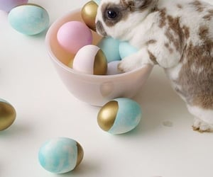 bunny, easter, and easter egg image