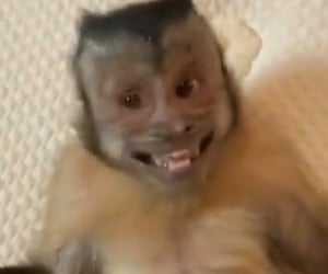 happy and monkey image