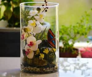 orchid terrarium price image