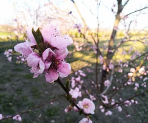 blossom, flowers, and hello spring image