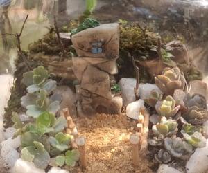 home decor, indoor plant, and terrarium image