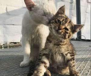 cats, lovely, and cute image