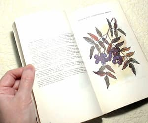 etsy, old books, and medicinal plants image