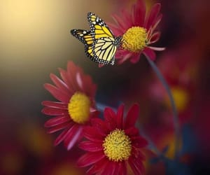 background, butterflies, and butterfly image