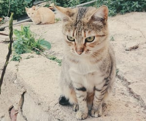 animal, cat, and lovely image