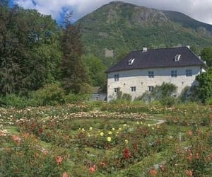 nature, flowers, and cottage image