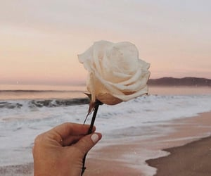 flowers, beach, and rose image
