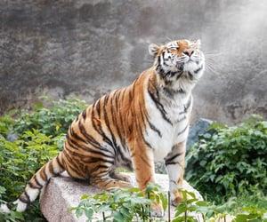 adventure, feline, and jungle image