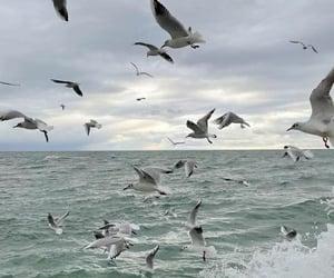 birds, ocean, and sea image
