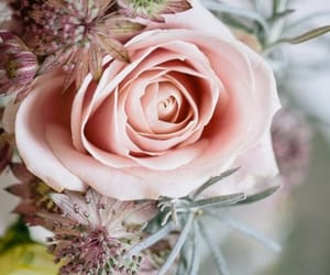 bouquet, flower, and pink image