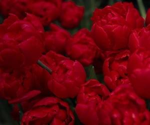 flowers, girls, and nice image