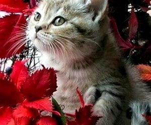 цветы, кошки, and фотографии image