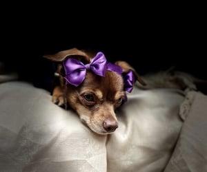 dog, niunamenos, and 8m image