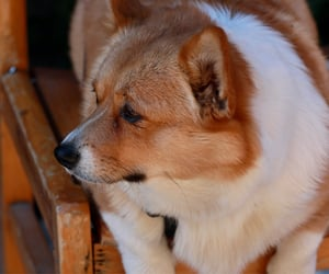 animals, doggy, and yunnan image
