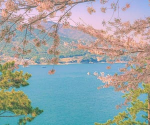 blue, cherryblossom, and Corea image