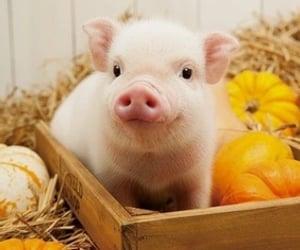 piggy, pumpkins, and cute image