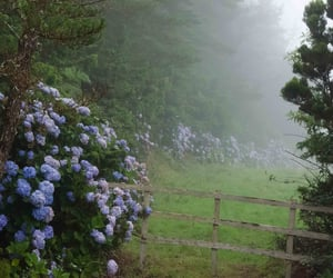 nature, flowers, and fog image