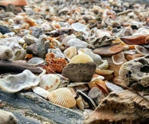 praia, shell, and beach image