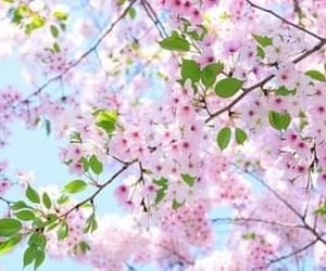 cherry blossom, march, and sunny days image