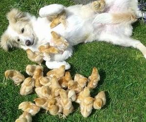 Animales, mascotas, and animale image