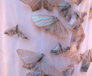 aesthetic, archive, and butterfly image
