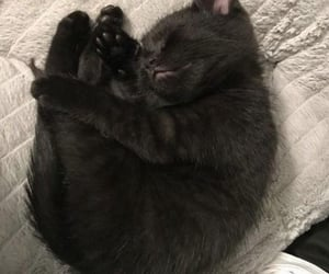 black cats and cats image