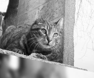 cat, meral meri, and animal image