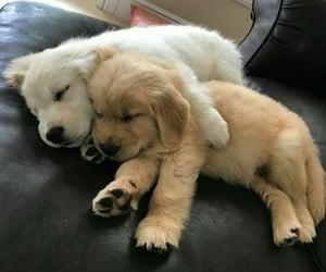 animals, dogs, and sleepy image