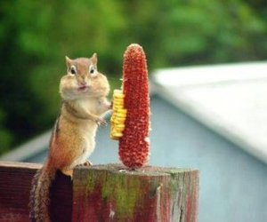 animal, funny, and squirrel image