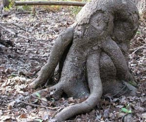 nature, roots, and tree image