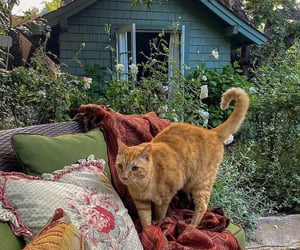 cat, animal, and garden image