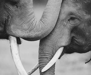 elephant, animal, and love image