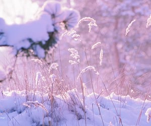 lilac, nature, and pastel image