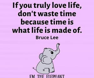 elephant, Words to Live By, and life quote image