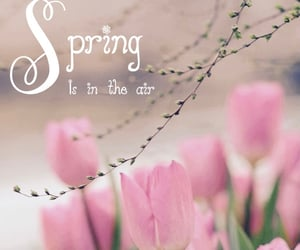 march, spring, and spring is in the air image